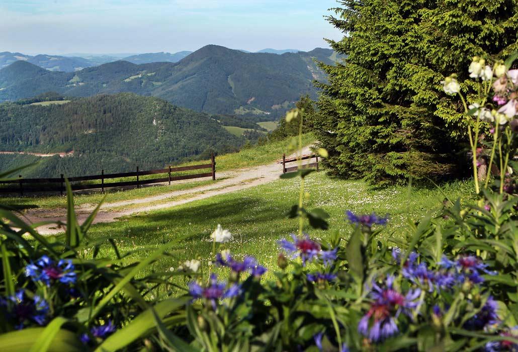 Skitouren und Wanderberg in Niederösterreich im Sommer