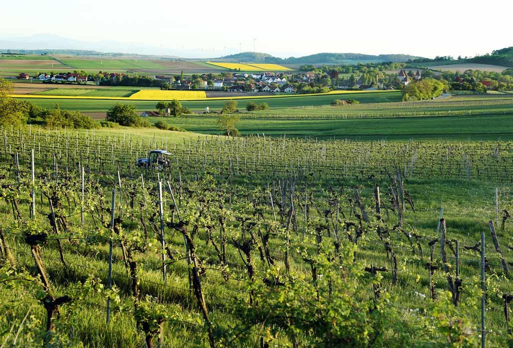 Weingarten im Traisental im Sommer